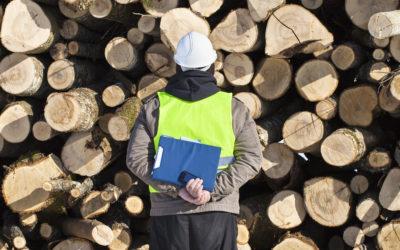 Les travailleuses et travailleurs au cœur des forêts de la région