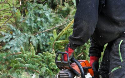Le Syndicat de la sylviculture (SNS) entame sa tournée des chantiers forestiers